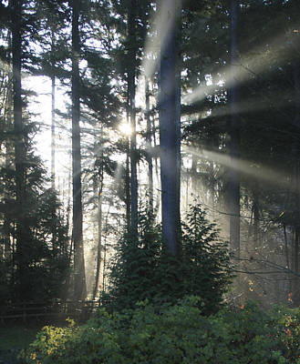 Fir Trees Photograph - Forest Sunrise by Crista Forest