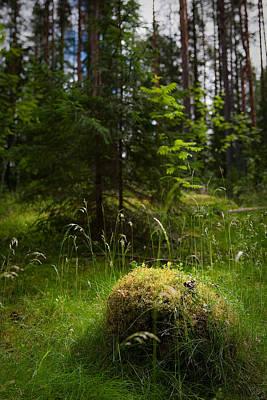 Forest Tales Print by Konstantin Dikovsky