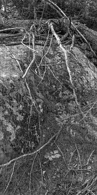 Nature Photograph - Forest Texture Course Weave Violet Shade T Bw by Peter Garland
