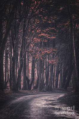 Forest Trail Print by Carlos Caetano