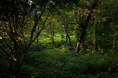 Forestland In Sudbury Ma Wayside Inn Print by Toby McGuire