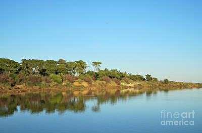 Forest Photograph - Forests Mirror by Angelo DeVal