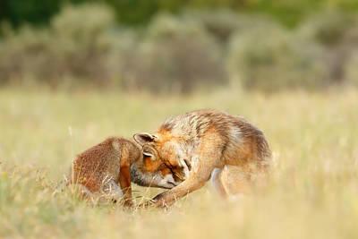 Foreverandeverandever - Red Fox Love Print by Roeselien Raimond
