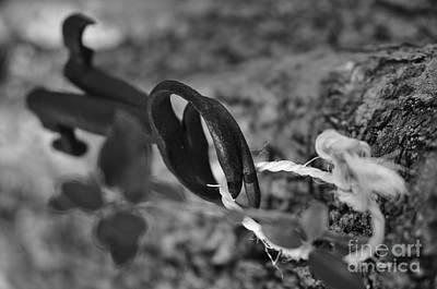 Trees Photograph - Forgotten Keys by Angelo DeVal