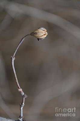 Forgotten Plant 1 Print by Eva Maria Nova