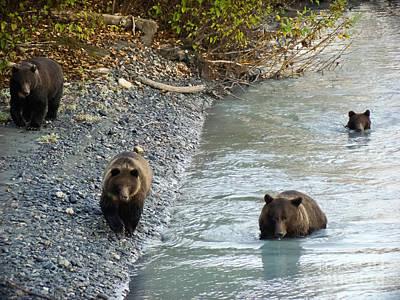 Alaska Photograph - Four Bears by Dora Miller