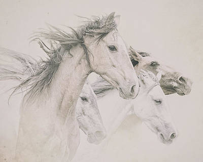 Photograph - Four Horses by Ron  McGinnis