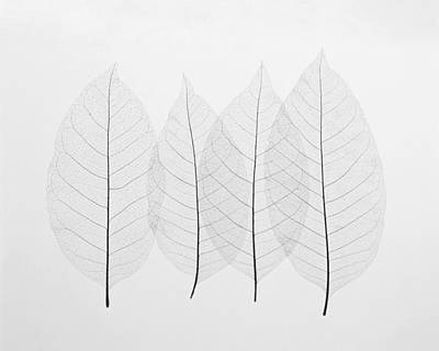 Autumn Photograph - Four Leafs by BONB Creative