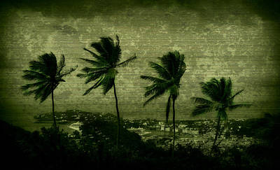 Four Palms Print by Perry Webster