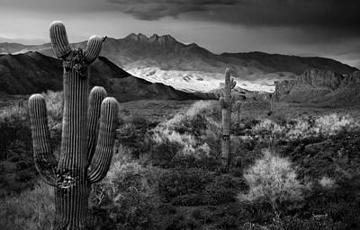 Sonoran Desert Photograph - Four Peaks Az Sunset by Dave Dilli