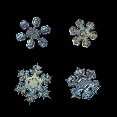December Photograph - Four Snowflakes On Black 2 by Alexey Kljatov