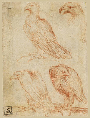 Drawing - Four Studies Of An Eagle by Parmigianino