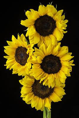 Sunflowers Photograph - Four Sunny Sunflowers by Garry Gay