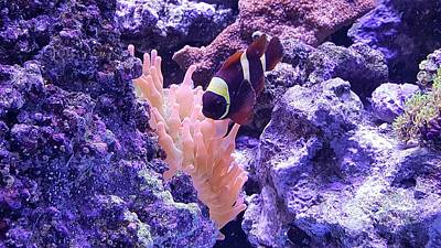 Clown Fish Digital Art - Foward Nemo  by Rob Hans