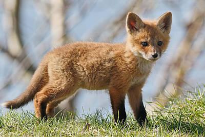 Jim Nelson Photograph - Fox Cub by Jim Nelson