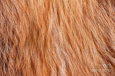 Fox Furry Texture Cloth Abstract Print by Arletta Cwalina