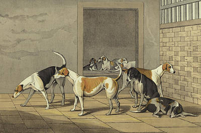 Dog Drawing - Fox Hounds by Henry Thomas Alken