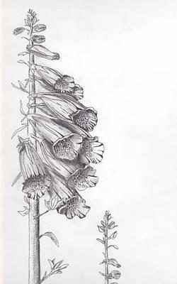 Foxglove Print by Janel Bragg