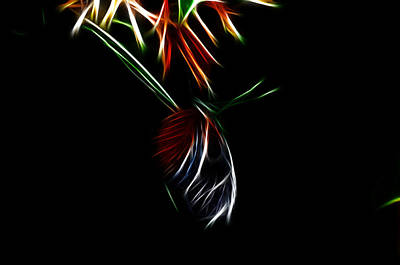 Fractal Photograph - Fractal Butterfly by Lawrence Christopher