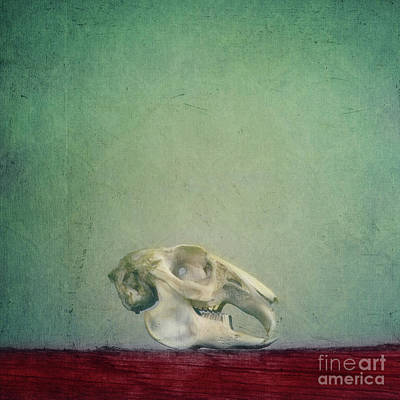 Rabbit Hunting Photograph - Fragility by Priska Wettstein