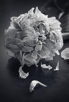 Interior Still Life Photograph - Frail Goodbye by Maggie Terlecki
