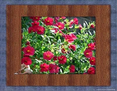 Framed Petunias Print by Morning Dew