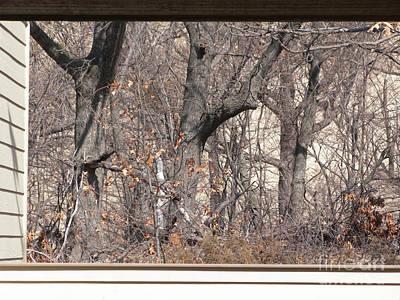 Framing Tangled Dunescape Print by Ann Horn