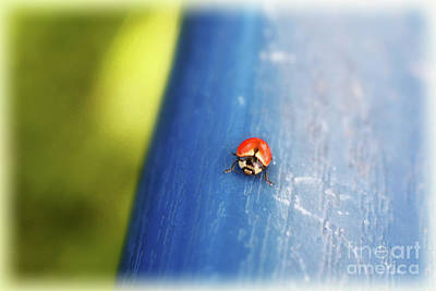 Photograph - Free As A Lady Bug by Janie Johnson