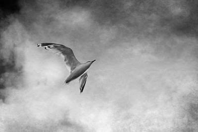 Freedom In Black And White Print by Maggie Terlecki