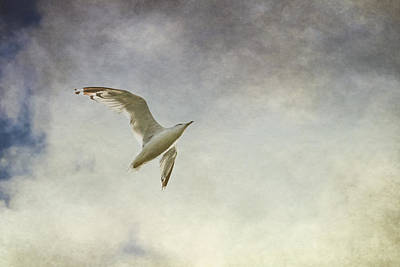 Flying Seagull Photograph - Freedom by Maggie Terlecki