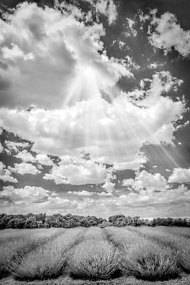Black Photograph - French Lavender Field by Susan Candelario