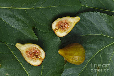Figs Photograph - Fresh Figs 3 by Angelo DeVal