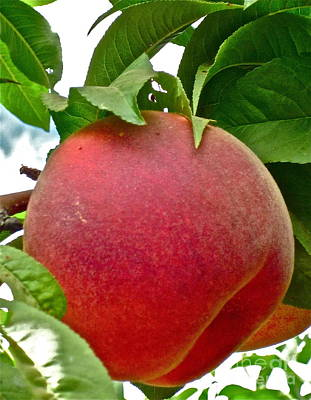 Peach Digital Art - Fresh Peach by Gwyn Newcombe