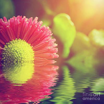 Daisy Photograph - Fresh Spring Daisy Flower In Water by Michal Bednarek