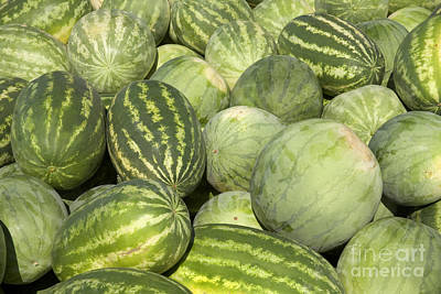 Watermelon Photograph - Freshly Harvested Watermelons by Inga Spence
