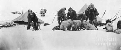 Arctic Dog Painting - Fridtjof Nansen (1861-1930) by Granger