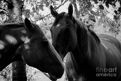 Horse Photograph - Friends by Jamie Haley