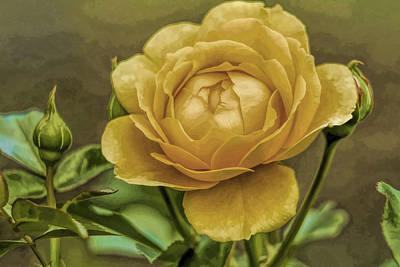Friendship Rose Print by Geraldine Scull