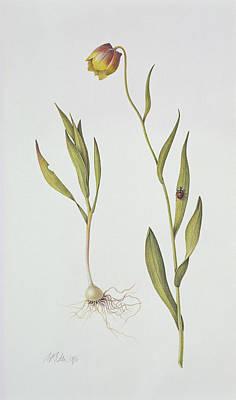 Ladybug Drawing - Fritillaria Michailovsky by Margaret Ann Eden