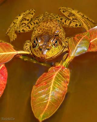 Frog Nature Wear Print by LeeAnn McLaneGoetz McLaneGoetzStudioLLCcom