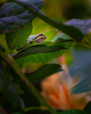 Canon 6d Photograph - Frog by Thomas Hall Photography