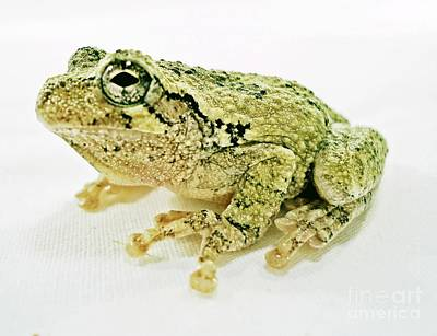 Froggy Original by Karen Wallace