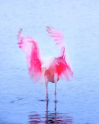 Spoonbill Photograph - From The Heavens by Mark Andrew Thomas