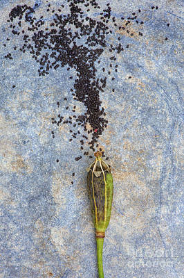 From Tiny Seeds Print by Tim Gainey