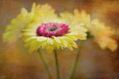 Gerber Daisy Photograph - Front And Center by Rebecca Cozart