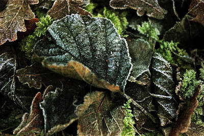 Photograph - Frosted Green by Randi Grace Nilsberg