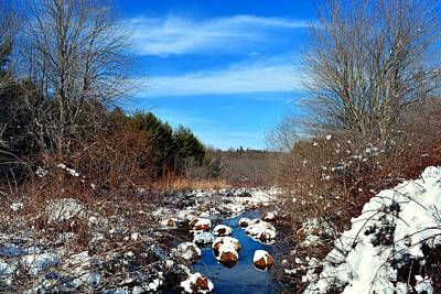 Winter Photograph - Frosted River Grass by Dani McEvoy