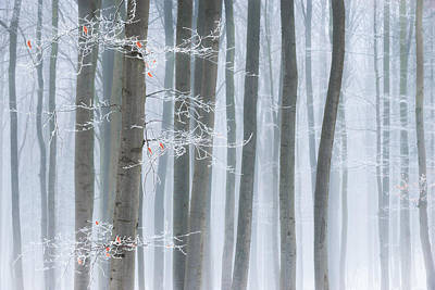 Hoarfrost Photograph - Frozen Beauty by Heiko Gerlicher