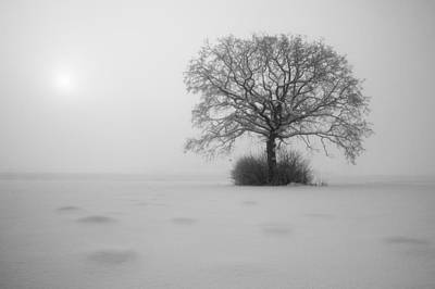 Winter Trees Photograph - Frozen by Davorin Mance