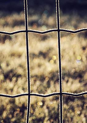 Mesh Photograph - Frozen Fence by Wim Lanclus